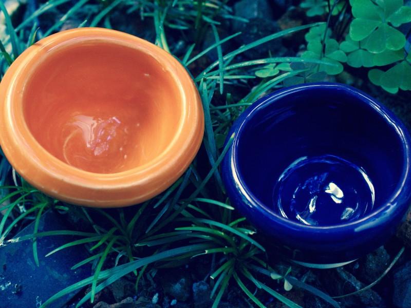 Ceramics in the wild.