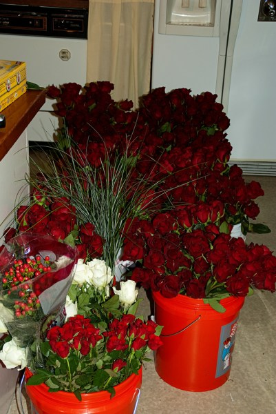 Have you ever seen 650ish roses in one place before?