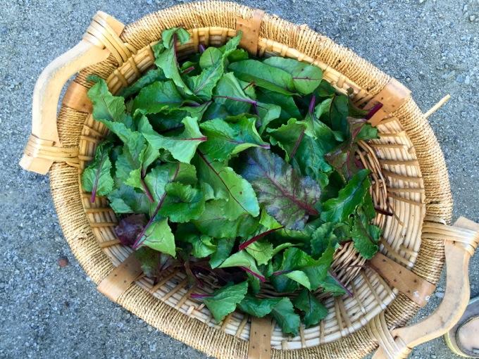 Garden Beet Greens