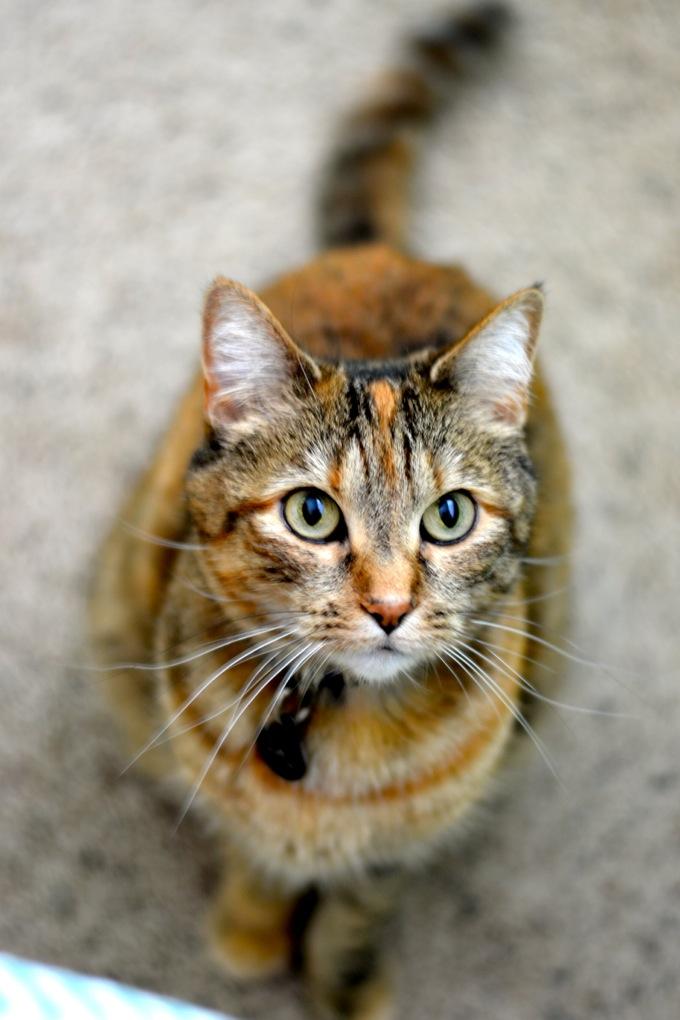 Cali Cat