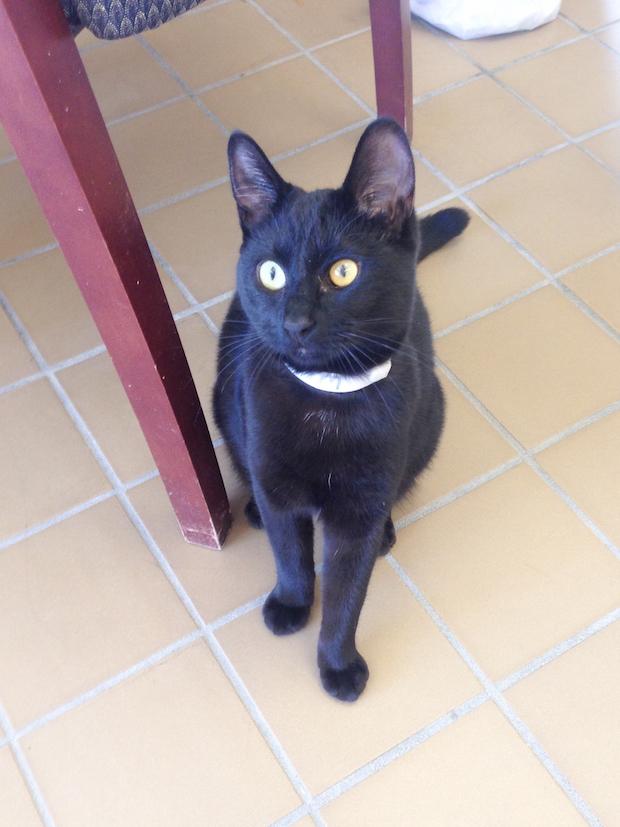 Adopt a Shelter Cat!