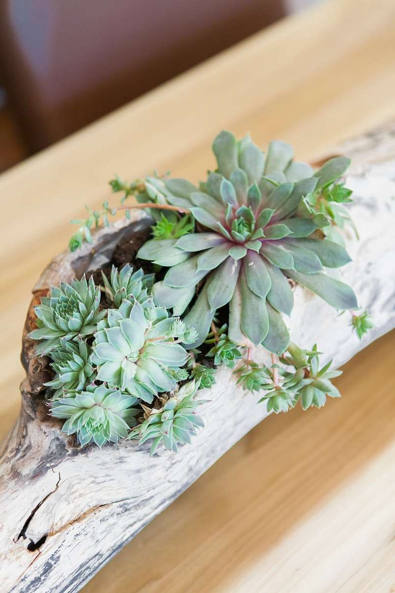 If you're looking for a reason to hit the beach this summer, do I have the reason for you! Amidst redoing the dining room, I knew the table centerpiece had to be a knock out. Hence, this DIY driftwood succulent centerpiece came to be. And it only took 10 minutes to make. | DIY Succulent Driftwood Centerpiece | DIY Projects | DIY Home Decor | DIY Deco | Jessica Brigham Magazine Ready for Life