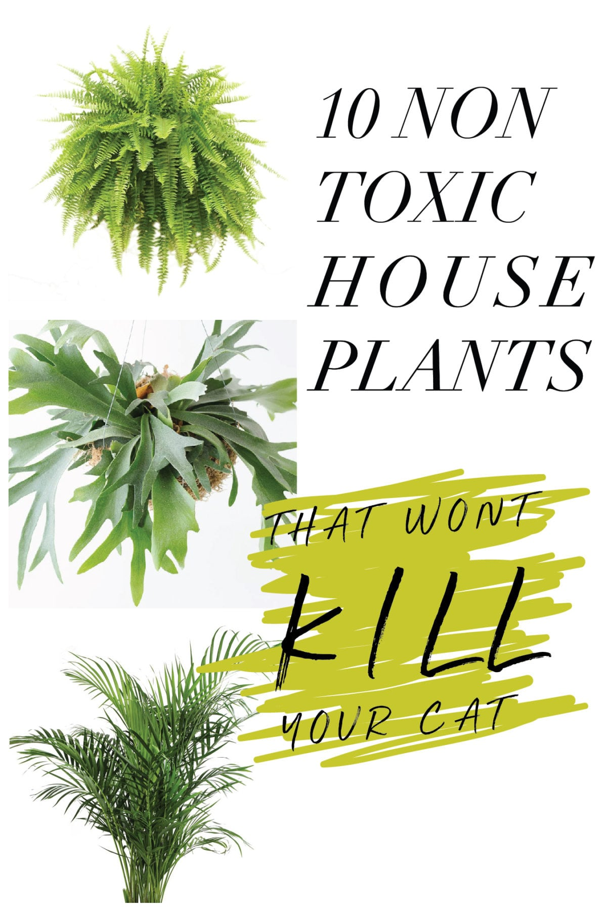 10 Non Toxic Houseplants That Won't Kill Pretty Kitty | Ponytail Palm | Common House Plants | Jessica Brigham | Magazine Ready for Life