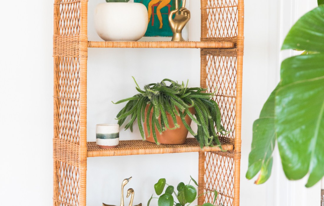 Plant Killer, eh? How to Keep Your Houseplants Alive