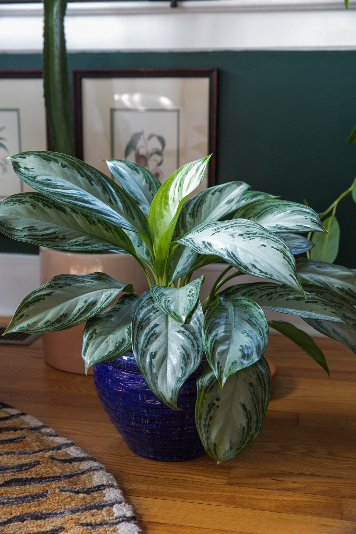 10 Low Light House Plants To Seriously Consider | Indirect Sunlight Plant BBs | House Plant Care Tips | JessicaBrigham.com