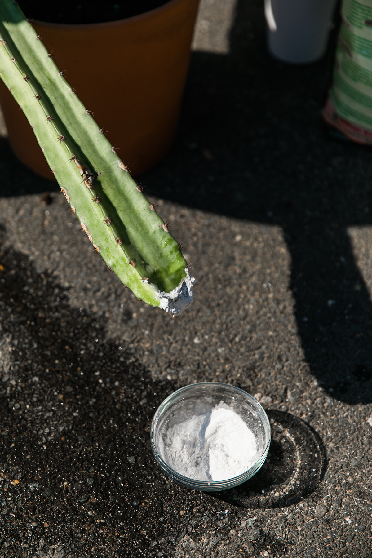 How to Root an Awesome 12-Foot Tall Cactus | #plantparday | Cacti Cutting | House Plant Care | JessicaBrigham.com
