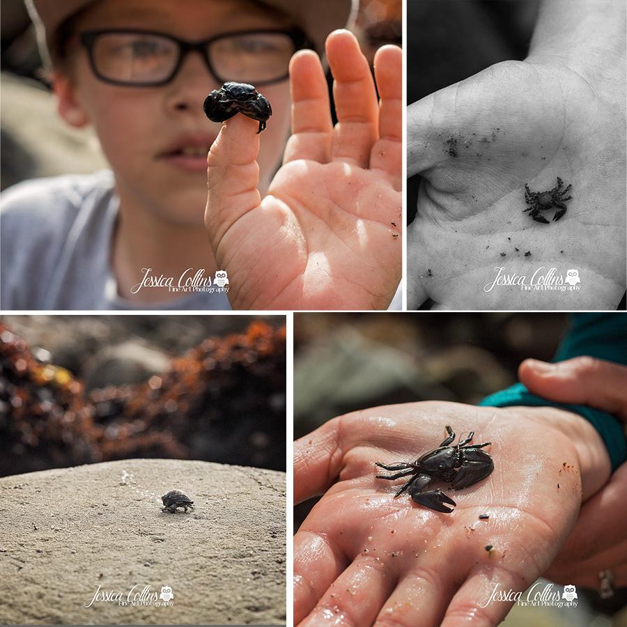Ocean, tidepool, sonoma county coast, photographer