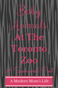 Baby Animals At The Toronto Zoo