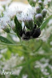 sleeping bee awe jkmcguire watermarked