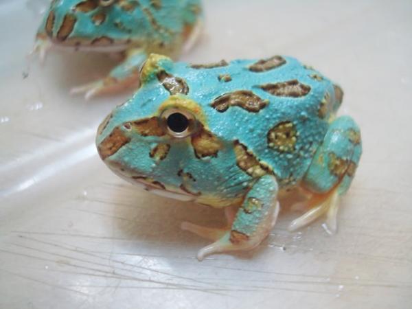 Pac Man Frog Day Cupcake Punk