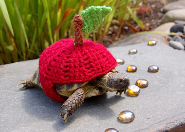 A tortoise lover has created new shell suits for her pets - transforming them into a giant Christmas tree, reindeer and Santa's hat. Other unique suits, made from coloured acrylic yarn include a roast chicken, cheeseburger and American football. Katie Bradley, 32, has made 800 of the cute woolly suits for the shelled animals. Pet owners can choose from 25 different designs, and others include a shark, flower, ladybird, burrito, bumble bee and a rocket. Mrs Bradley is from Vancouver, Washington, US. SEE OUR COPY FOR DETAILS. Pictured: A tortoise wearing an apple woolly suit. © Solent News & Photo Agency UK +44 (0) 2380 458800