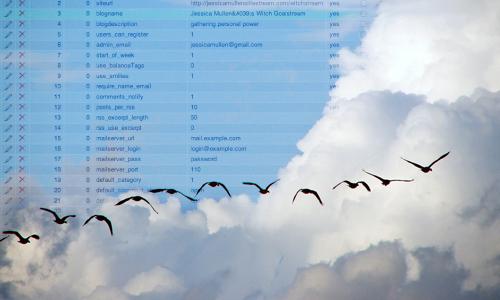 database birds!
