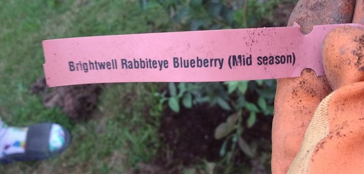 Meet our Blueberry bush Blarry