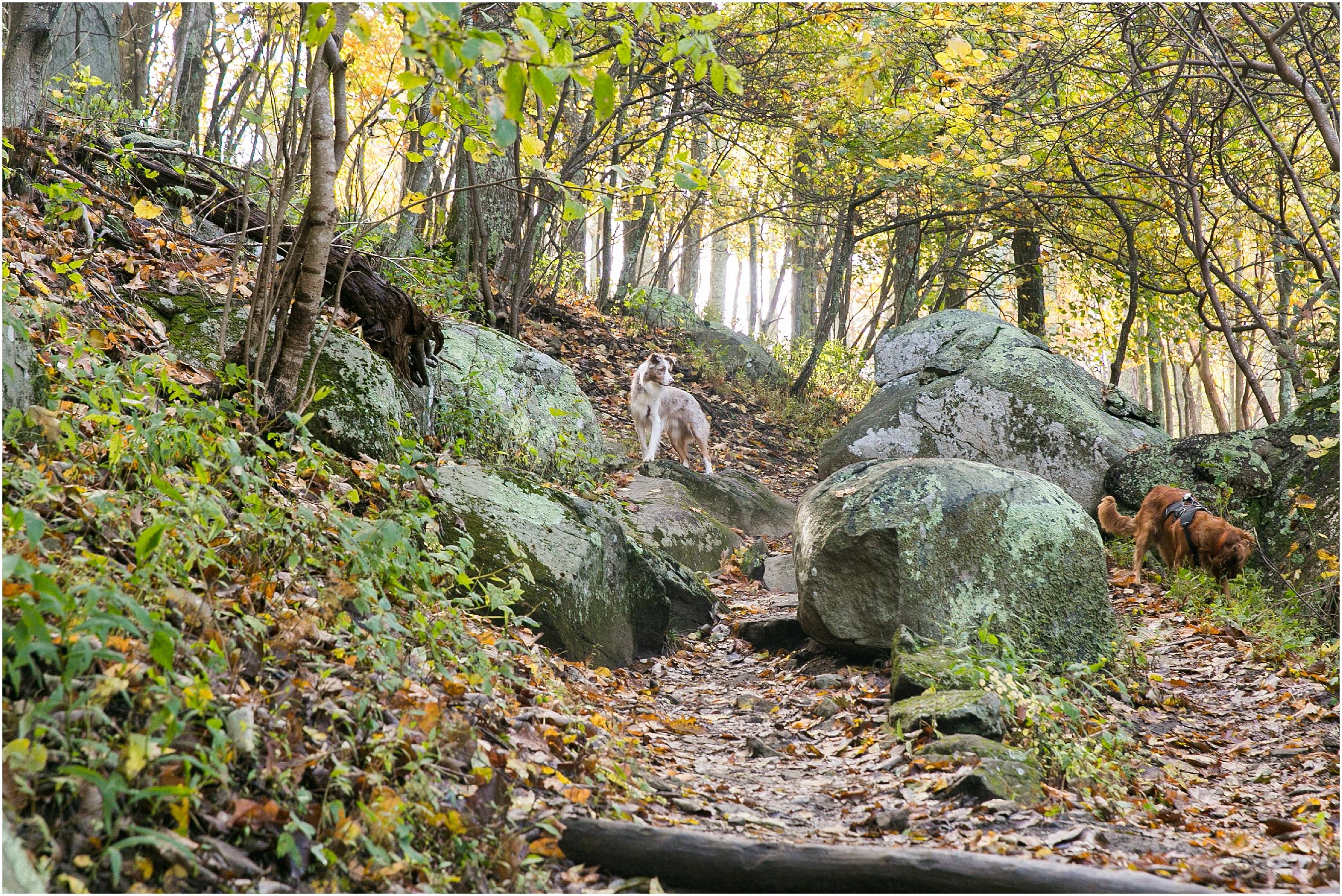 va_jessica_ryan_photography_blue_ridge_mountains_wintergreen_virginia_charlottesville_appalachian_trail_0156