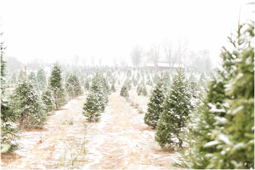 ... belmont christmas tree farm engagement photography winter engagement  snowing ... - Belmont Christmas Tree Farm Engagement Portraits Jessica Ryan