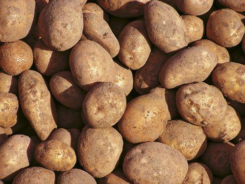 zwyczajny ziemniak