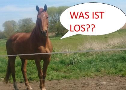 bieg transgraniczny gryfino koń