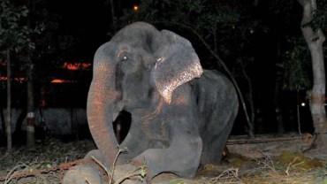 Po 50 latach niewoli – słoń wypuszczony na wolność zapłakał!