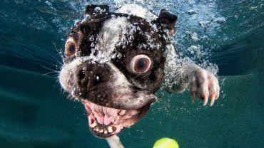 Czy zastanawiałeś się kiedyś, jak wygląda pies, który chce złapać zabawkę pod wodą?