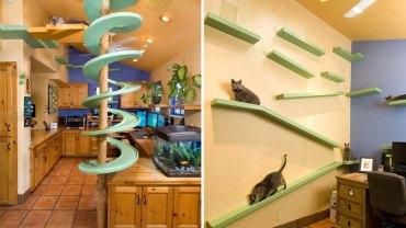 Przyjazny dom dla kota – zainspiruj się!