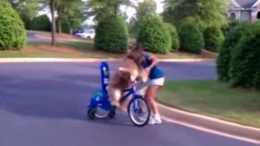 Takiego czegoś jeszcze nie widzieliście! Pies na rowerze?