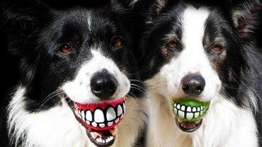 16 gadżetów, które odmienią życie twojego psa!