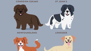 Skąd pochodzą poszczególne rasy psów? Odpowiedź znajdziesz na tych uroczych plakatach!