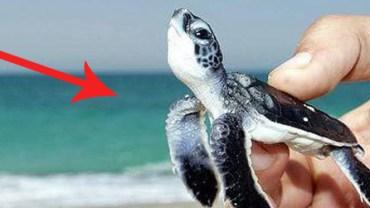 Tych 25 maleńkich zwierząt mieści się… na palcu!