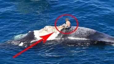 Siedział półnagi na martwym wielorybie, okrążony przez ogromne rekiny!