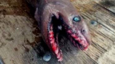 To, co złowił ten australijski rybak, na pewno nigdy nawet nie śniło się żadnemu wędkarzowi!