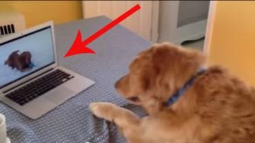 Ten pies też lubi oglądać filmiki w internecie! Nie wierzycie? Sprawdźcie!