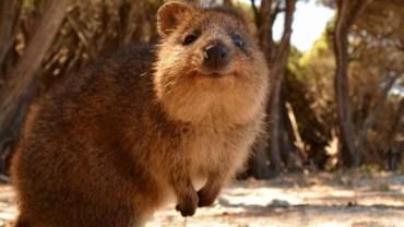 Poznaj najsłodszego zwierzaka na ziemi! Czy wiesz jak się nazywa?