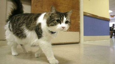 Tego kota obawiają się wszyscy pacjenci amerykańskiego centrum medycznego. Poznaj historię Oskara.
