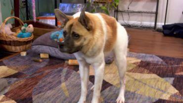 Ten pies urodził się z nietypową chorobą genetyczną. Nie przeszkadza mu ona jednak cieszyć się pełnią życia!