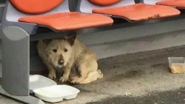 Ten bezdomny pies spędził całą mroźną zimę, błąkając się po ulicach. Gdy wreszcie przyszła pomoc, nie mogłam opanować łez wzruszenia…