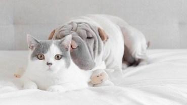 Gdy patrzę na przyjaźń tych dwojga, nie mogę uwierzyć w jej zażyłość!