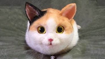 Tego kota możesz zabrać, gdzie tylko chcesz… nie zgadniesz dlaczego!