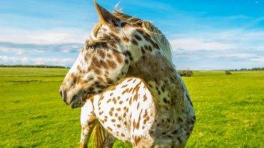 Konie, które wyglądają jakby były z innej planety. Ciężko uwierzyć, że naprawdę istnieją