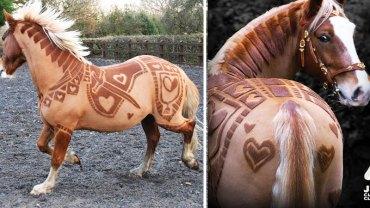 Styliści koni i efekty ich ciężkiej pracy. Zobacz, jakie cuda potrafią stworzyć!