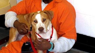 Resocjalizacja poprzez opiekę nad zwierzętami. Poznaj skutki tego śmiałego pomysłu pomocy więźniom