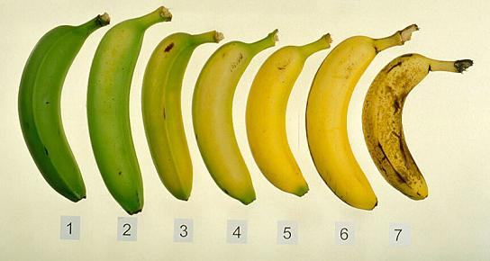 bananascale
