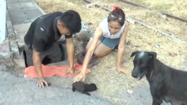 Gdyby nie wytrwałość zrozpaczonej suki, nikt by nie pomógł temu szczeniakowi. Uratowano go dopiero po 48 godzinach!