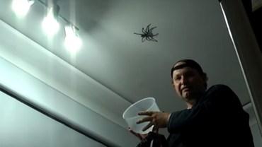 Tata chciał zaimponować córce i złapać wielkiego pająka. Uwaga, nagranie nie dla ludzi o słabych nerwach!