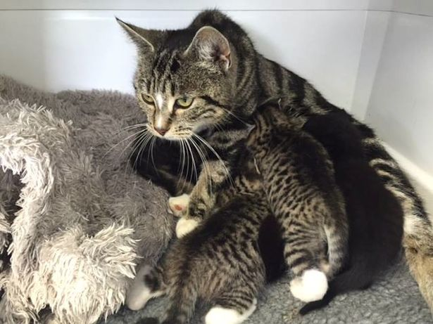 Mother-cat-sneaks-into-a-vet-clinic-to-be-with-her-abandoned-kittens (2)