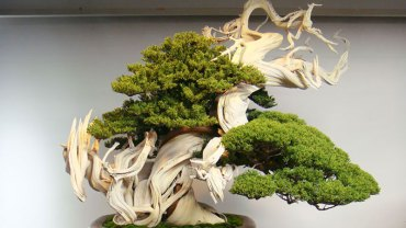 Małe jest piękne, czego najlepszym dowodem są drzewka Bonsai. Przekonajcie się, że te rośliny są totalnie zachwycające!