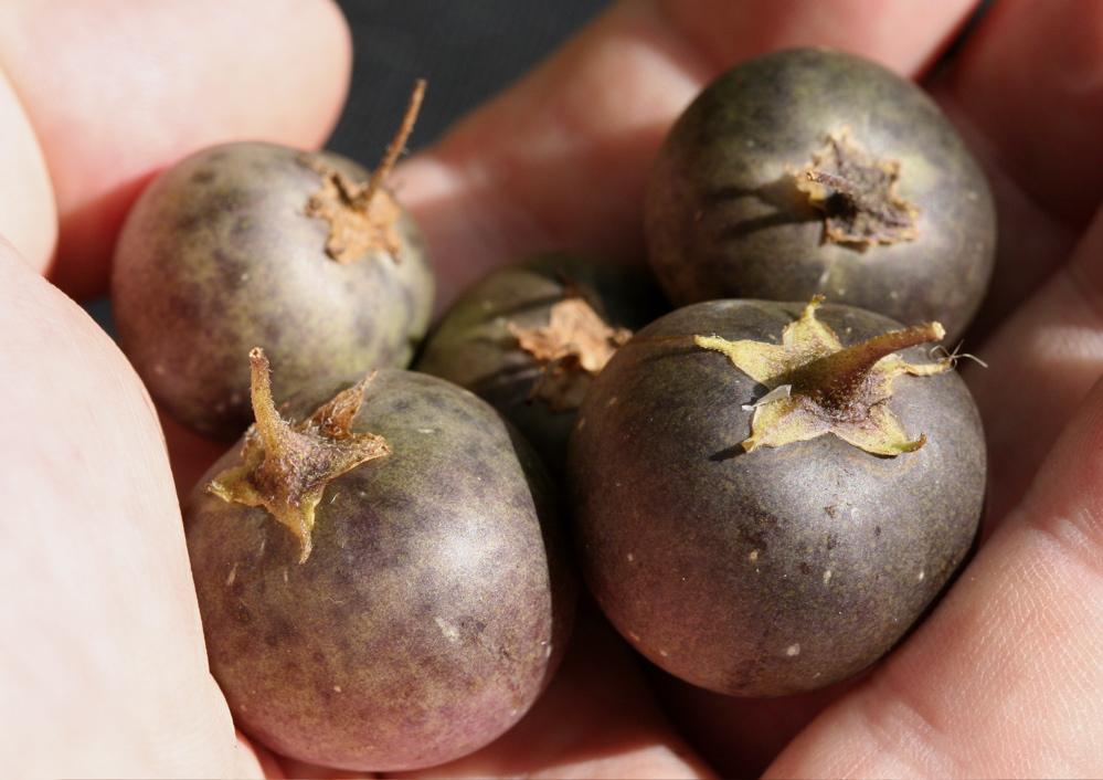 Potato_fruits