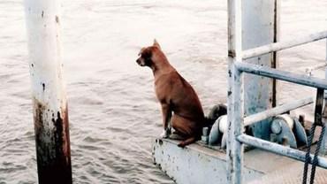 Usiadł nad brzegiem rzeki i czekał. Jego zachowanie łamie serce…