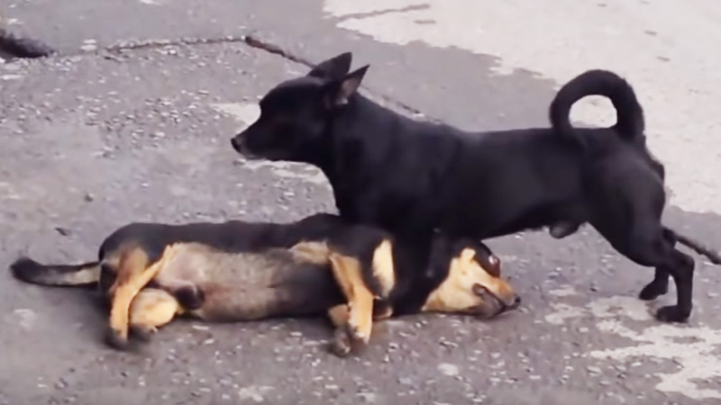 dead-dog