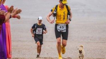 Bezdomny pies przebiegł prawie cały chiński ultra maraton, a co najważniejsze zyskał nowy dom