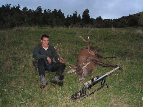 deer-kill